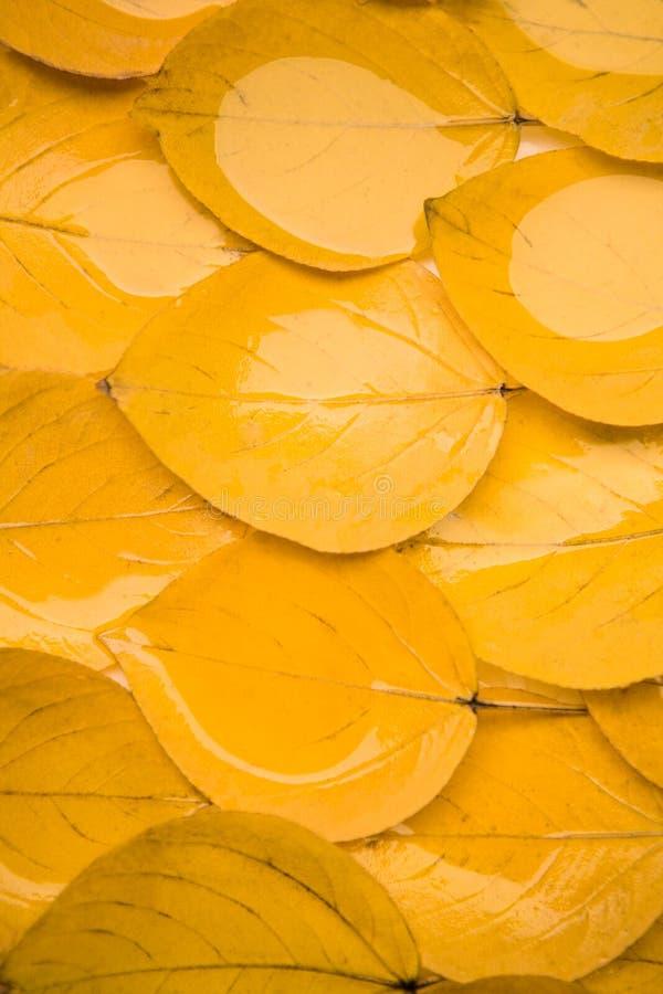 Dode bladeren stock foto