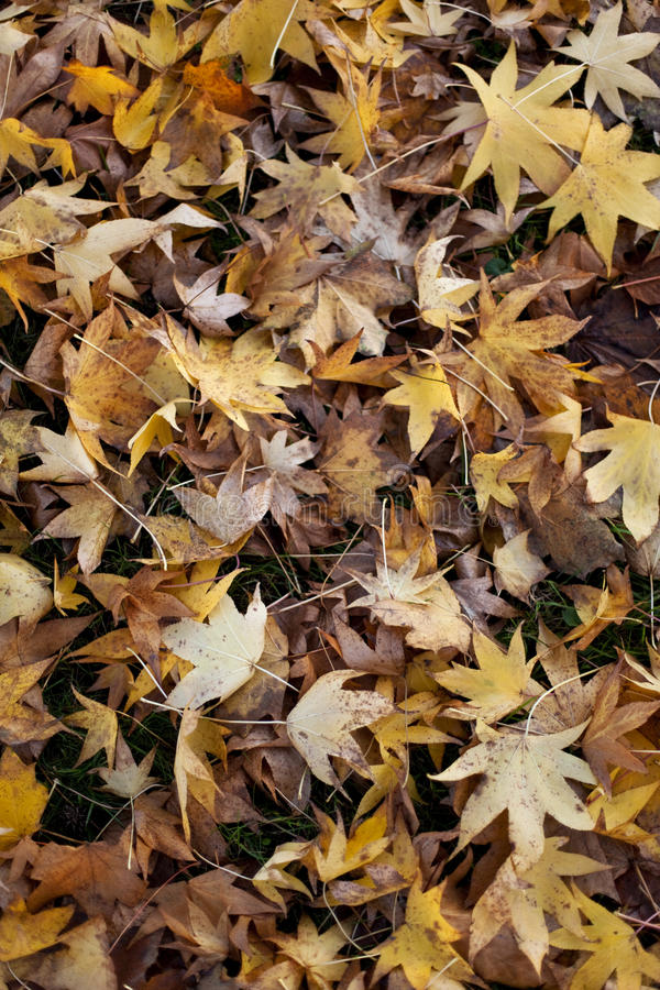 Dode bladeren in de Herfst royalty-vrije stock fotografie