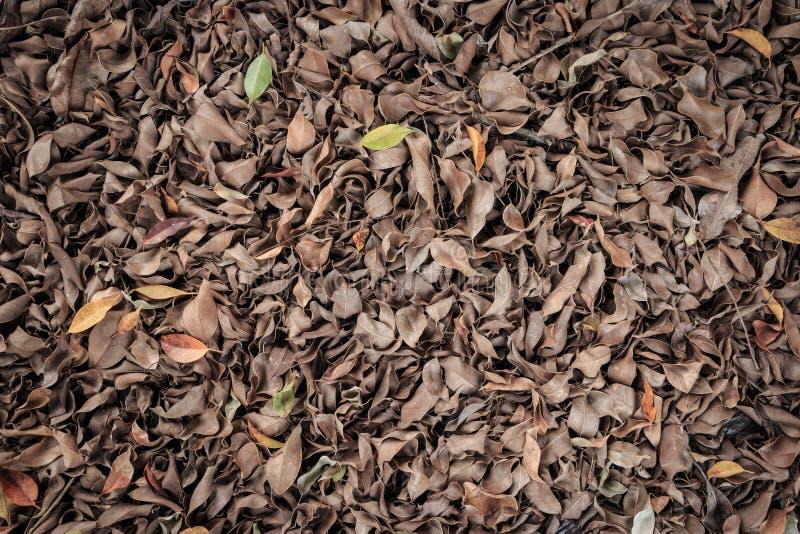 Dode bladeren voor achtergronden stock afbeeldingen