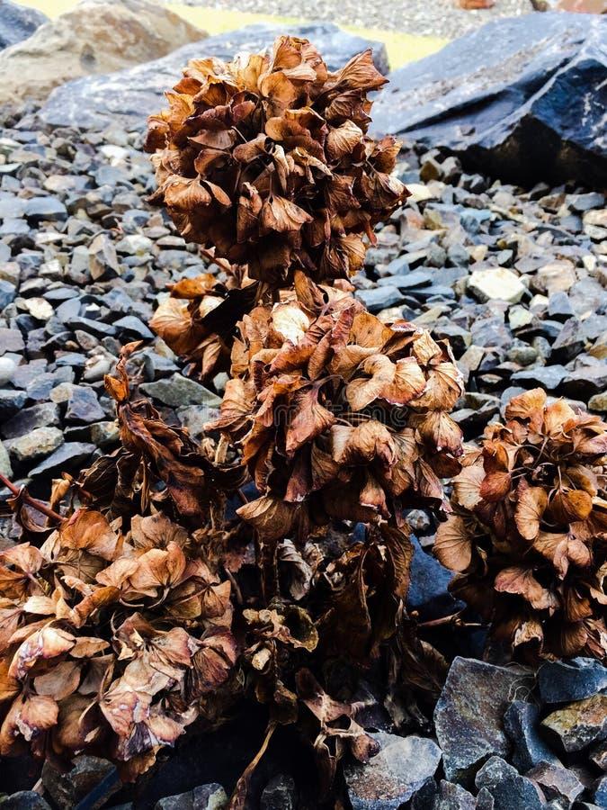 Dode bloem stock afbeelding