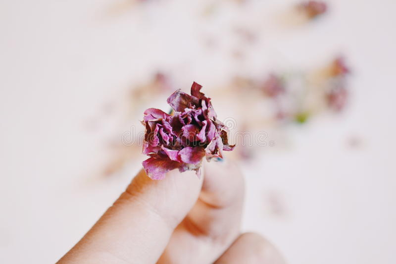Dode bloem royalty-vrije stock foto's