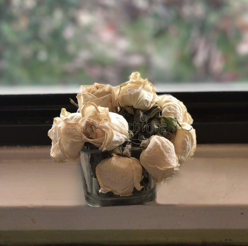Dode bloemen stock fotografie