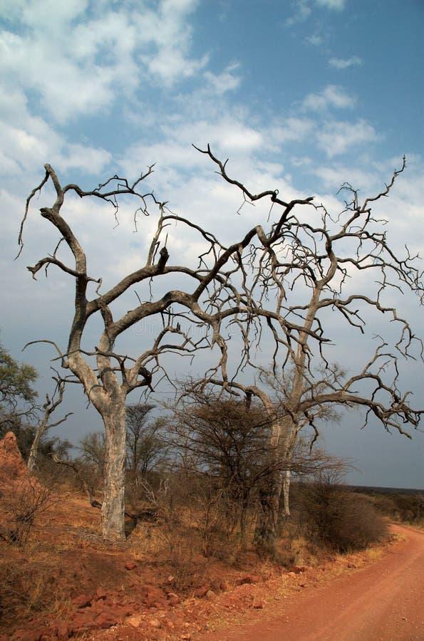 Dode bomen royalty-vrije stock afbeeldingen