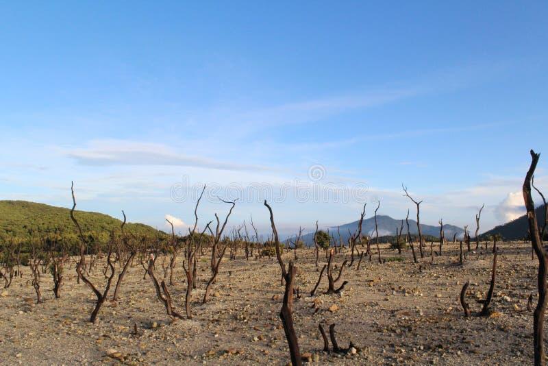 Dode bomen bij piek van de berg stock foto's