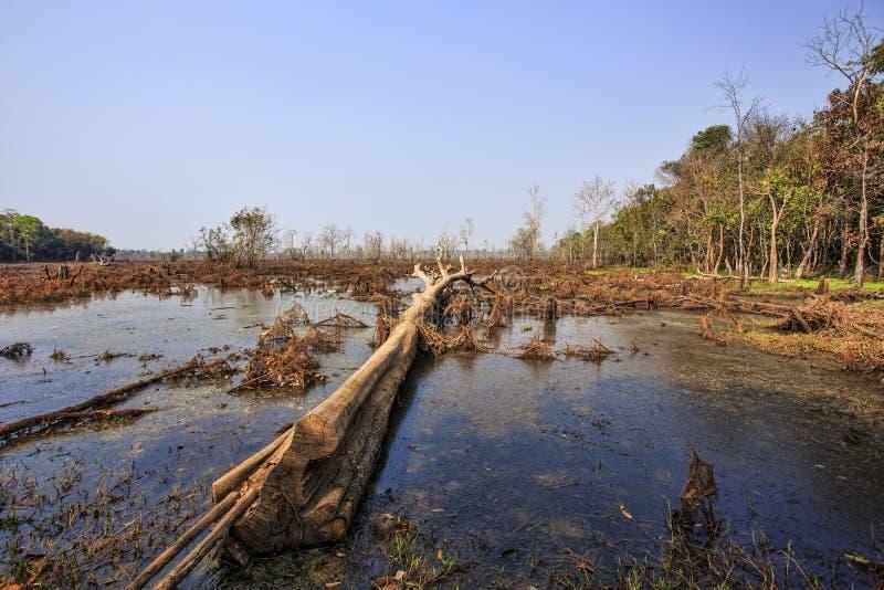 Dode bomen in bos stock afbeeldingen