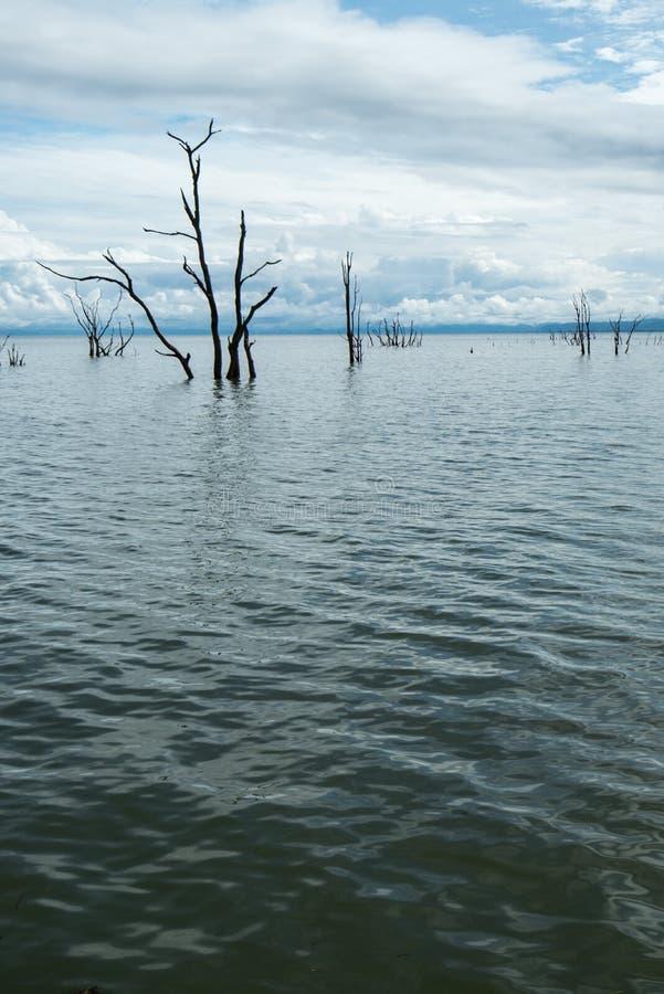 Dode bomen die uit het water bij Meer Kariba plakken royalty-vrije stock fotografie