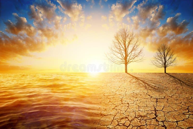 Dode bomen in droog land met gebarsten grond en overzees in de zonsondergang royalty-vrije stock afbeelding