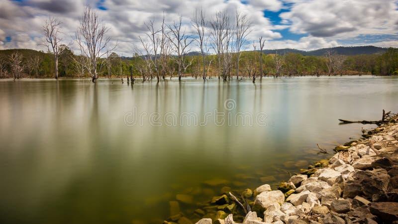 Dode bomen in een meer stock fotografie