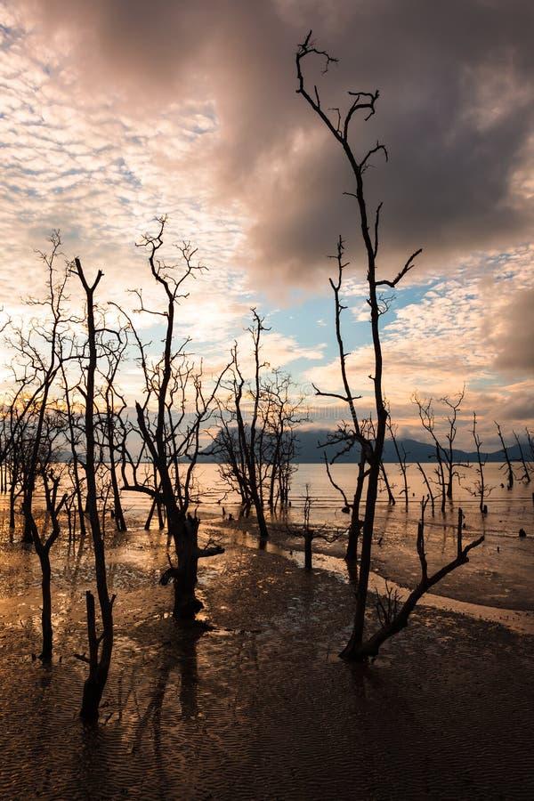 Dode bomen en modderig strand bij zonsondergang stock afbeelding