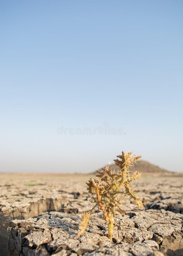 Dode Bomen in opgedroogde lege reservoir of dam tijdens een de zomerhittegolf, een lage regenval en een droogte in het noordenkar royalty-vrije stock afbeeldingen