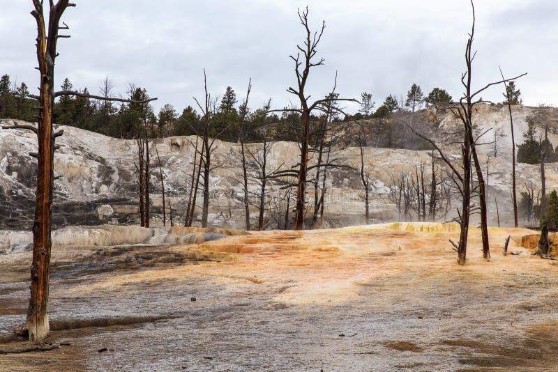Dode bomen in Yellowstone stock afbeelding