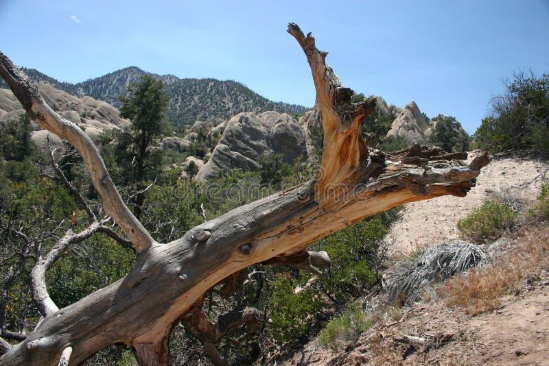 Dode boom bij de kom van de Duivelsstempel stock afbeeldingen