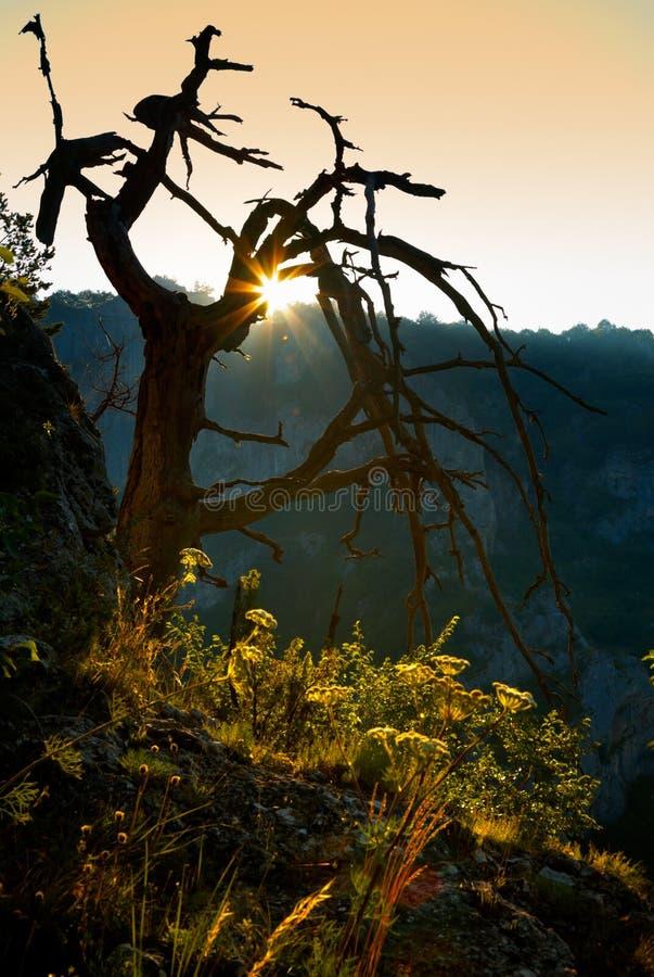 Dode boom bij zonsondergang royalty-vrije stock fotografie