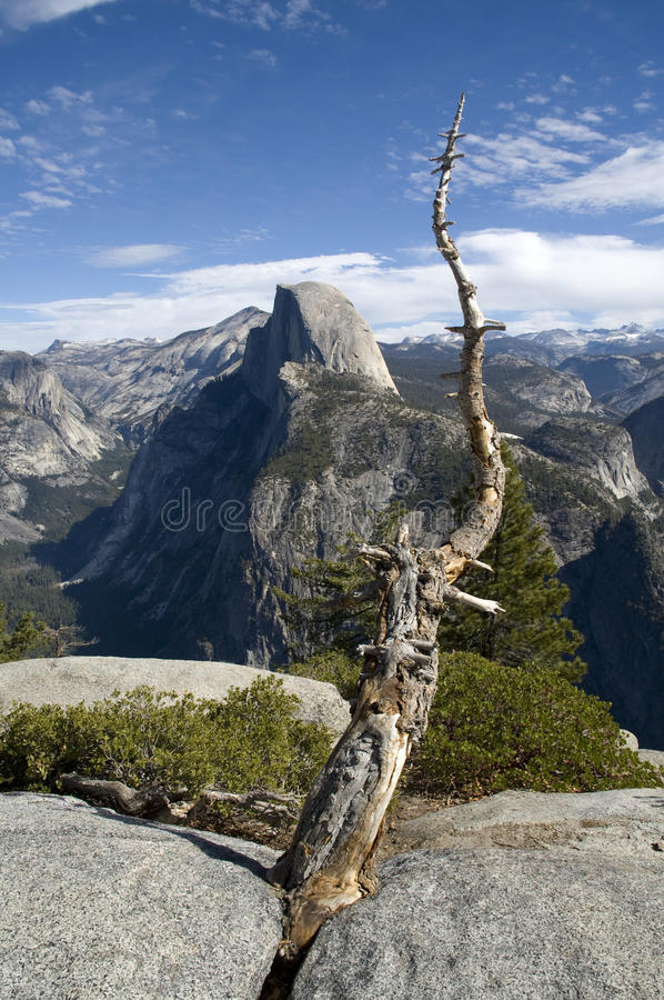 Dode boom en Halve Koepel in Nationaal Park Yosemite royalty-vrije stock foto's