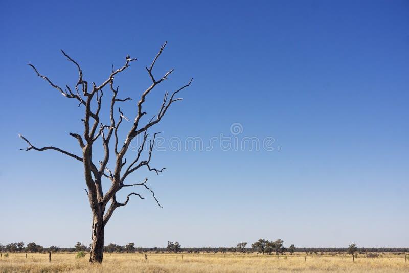 Dode boom in het land van het mitchellgras stock afbeelding