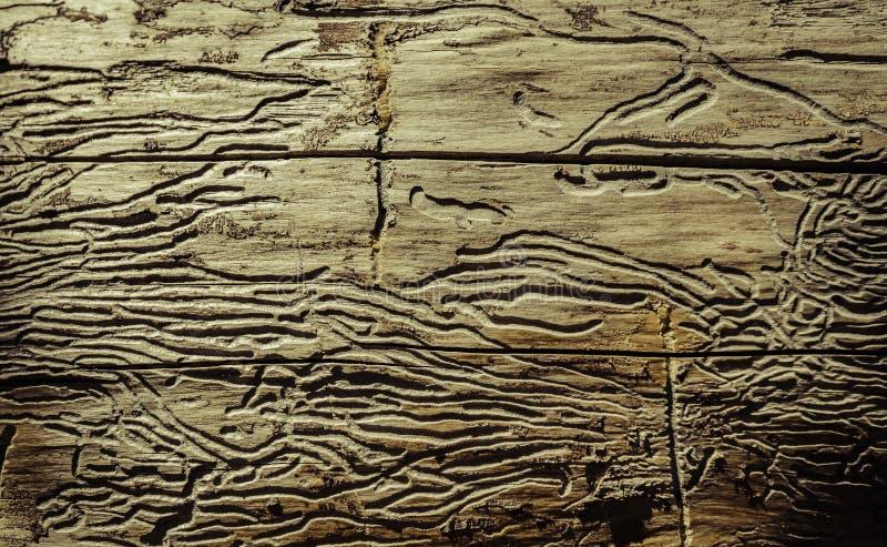Dode boom met termietweg in Bryce Canyon royalty-vrije stock afbeelding