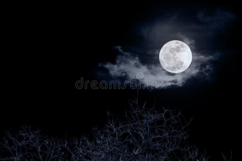 Dode boom met volle maan in nacht stock foto