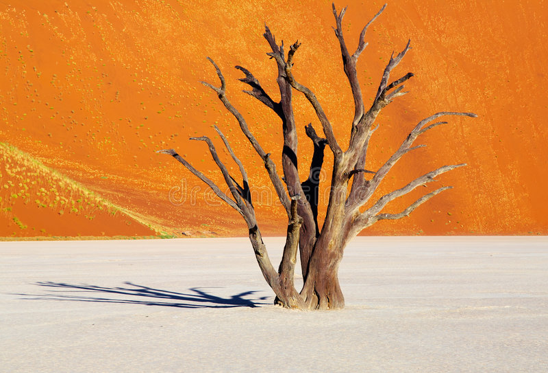 Dode boom, Namib Woestijn, Namibië stock foto