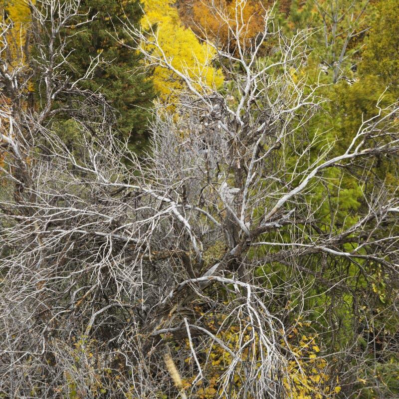 Dode boom onder levend gebladerte. royalty-vrije stock afbeeldingen