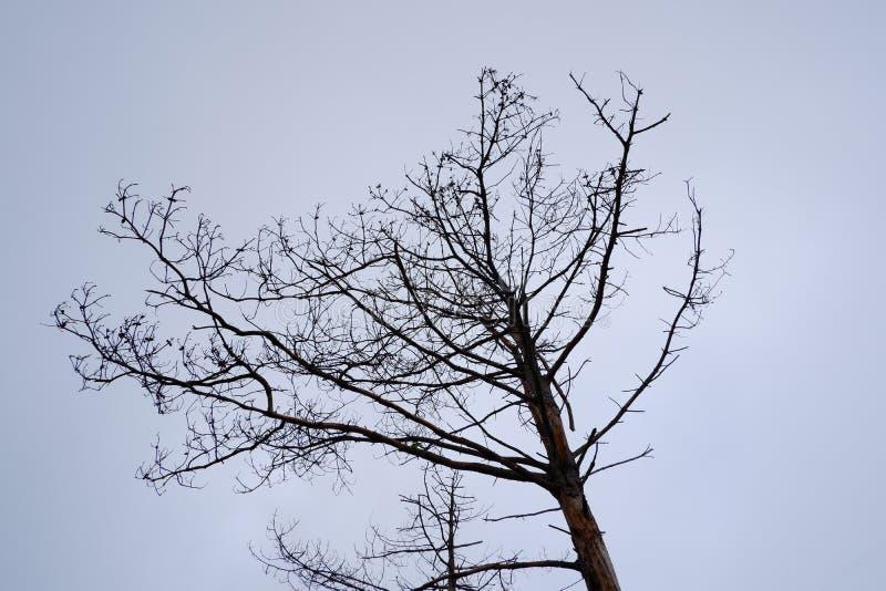 Dode boom onder schone hemel stock afbeeldingen