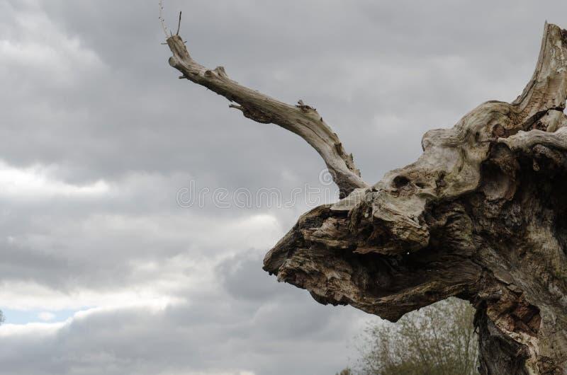 Dode boom onder stormachtige hemel stock afbeeldingen