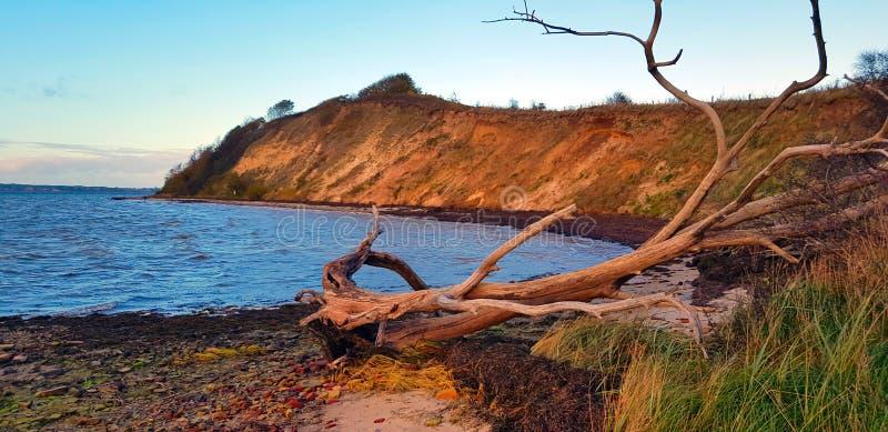 Dode boom op de kust stock afbeelding