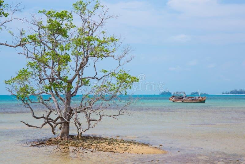 Dode boom op een strand royalty-vrije stock afbeeldingen