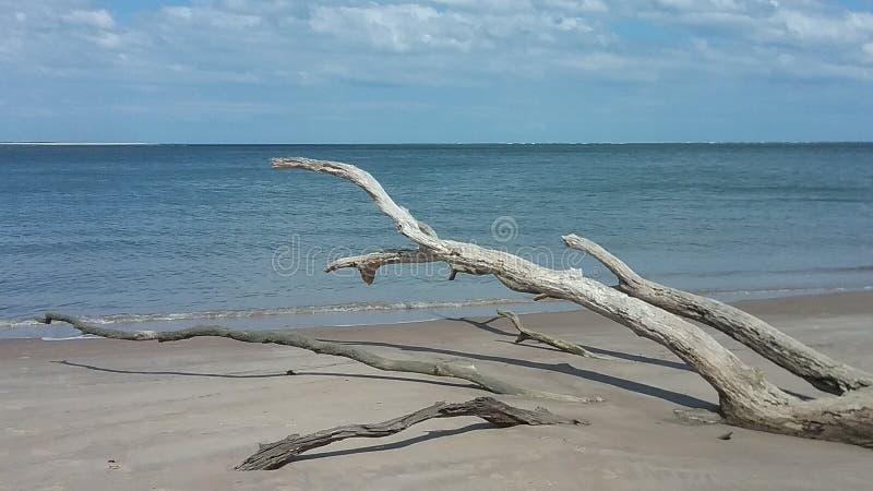 Dode boom op strand stock foto