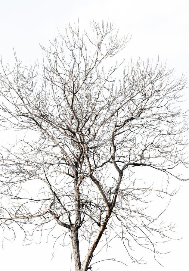 Dode boom op witte achtergrond royalty-vrije stock fotografie