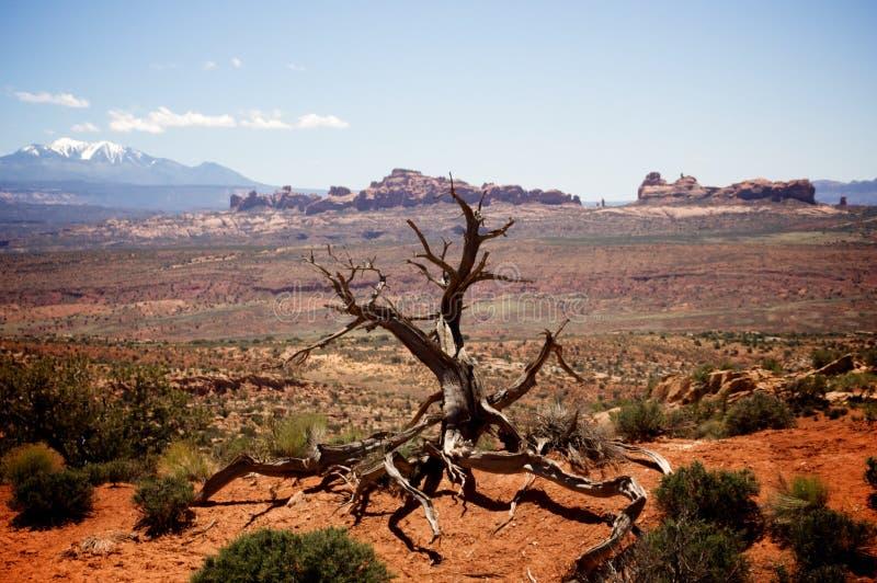 Dode Boom in Woestijn royalty-vrije stock foto