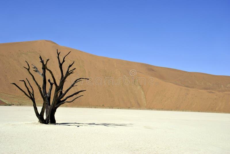 Dode boom in woestijn stock foto's