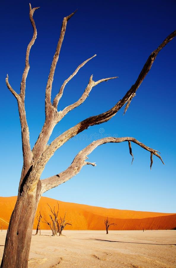 Dode boom in Woestijn Namib royalty-vrije stock foto's