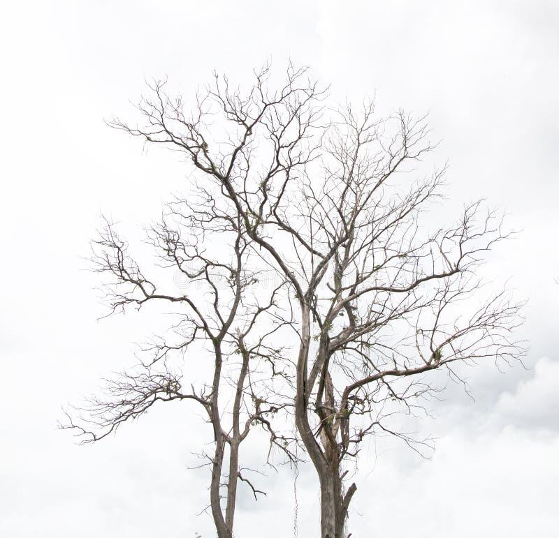 Dode boom zonder bladeren royalty-vrije stock foto