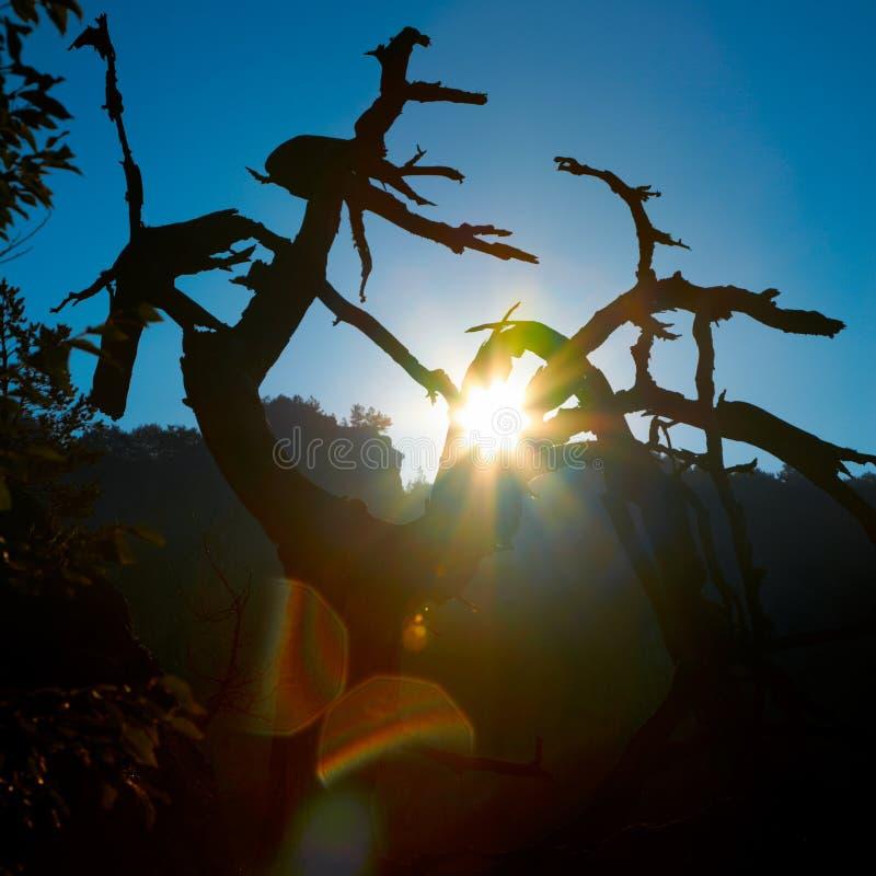 Dode boombrunches en de zon stock foto