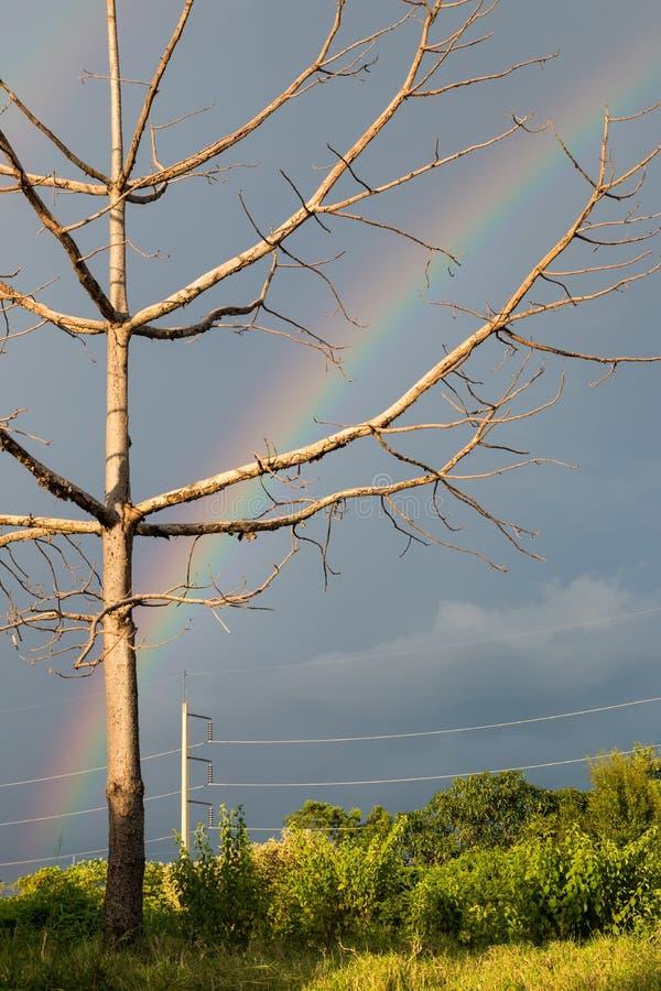 Dode boomtakken met bewolkte en regenwolken stock afbeelding