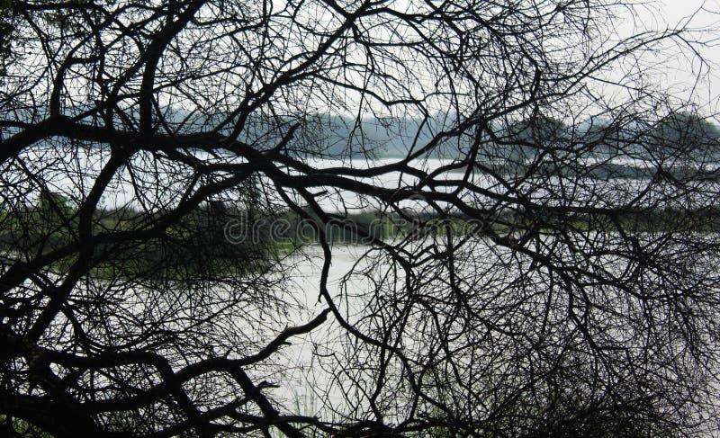 Dode boomtakken met landelijke meerachtergrond stock afbeeldingen