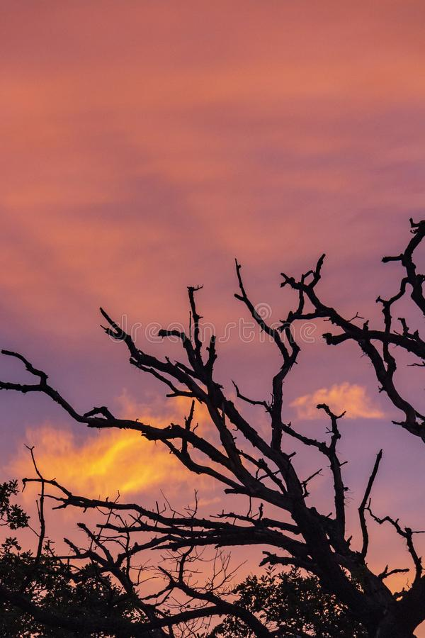 Dode eiken boomtakken tegen een mooie zonsonderganghemel royalty-vrije stock afbeelding