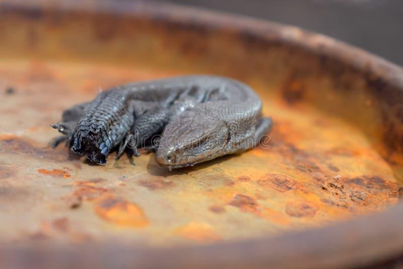 Dode hagedis zonder staart op roestig oppervlakteclose-up stock foto