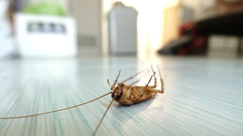 Dode kakkerlak op de vloer stock foto's