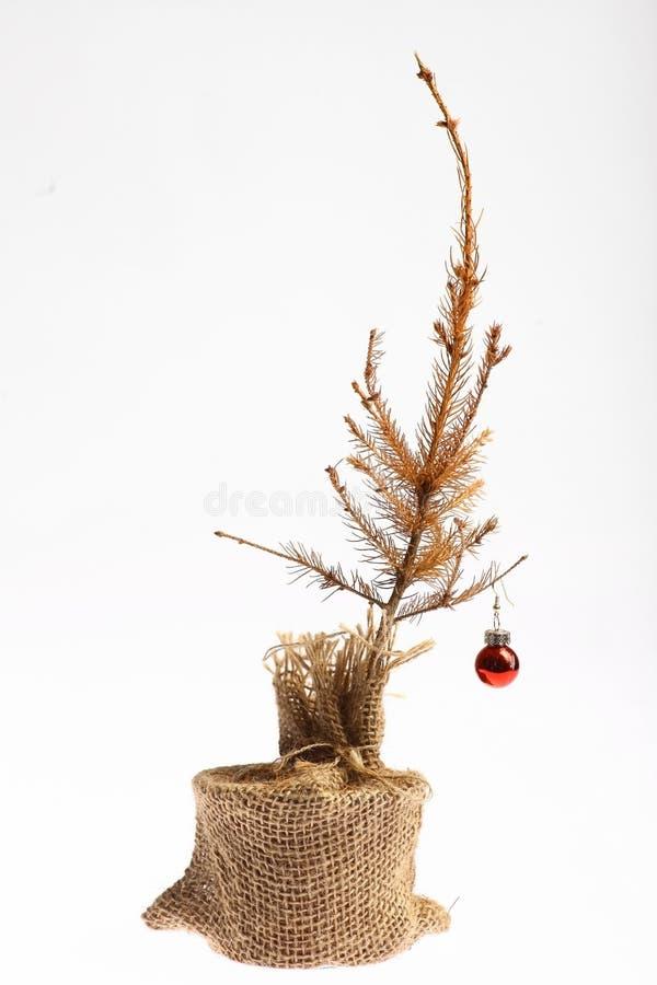 Dode Kerstboom royalty-vrije stock afbeeldingen