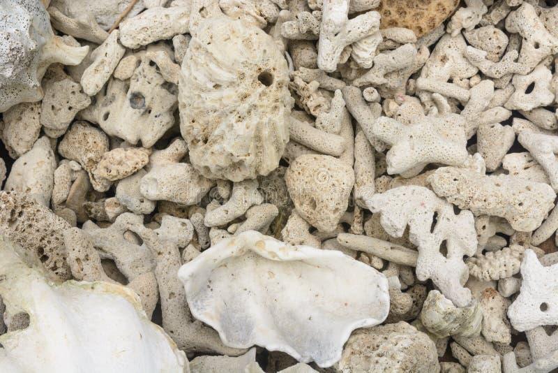 Dode koralen stock afbeelding