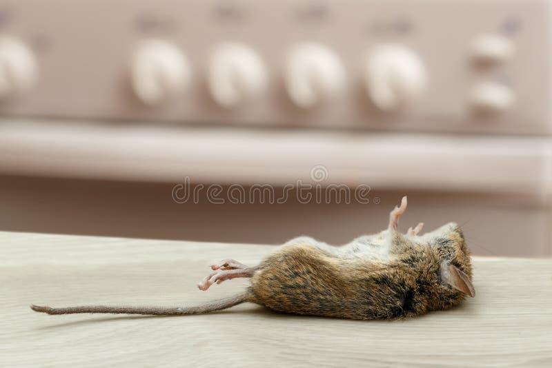 Download Dode Muis In Een Flatkeuken Muizencontrole Stock Foto - Afbeelding bestaande uit dood, biologie: 107704444
