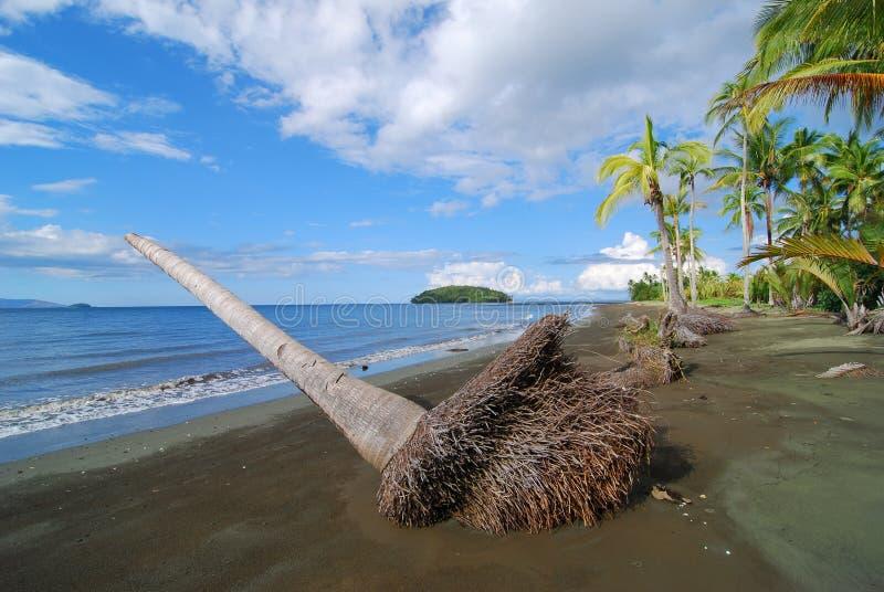 Dode Palm op Strand stock fotografie