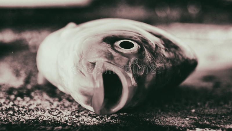 Dode vissen stock afbeelding