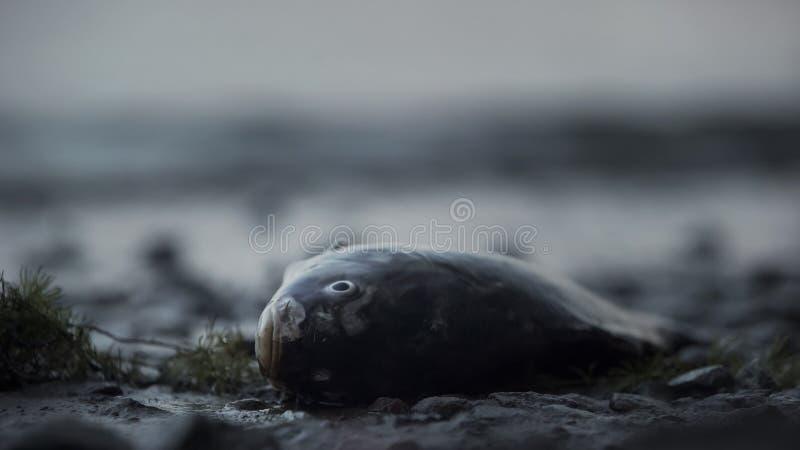 Dode vissen die op kust, tragedie in oceaan, milieuramp, ecologie liggen royalty-vrije stock afbeelding