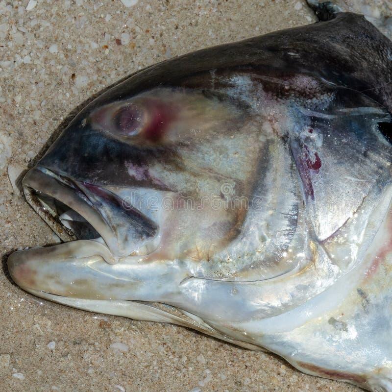 Dode vissen op het strand? beeld opgezet met verfraaid biohazard symbool royalty-vrije stock fotografie