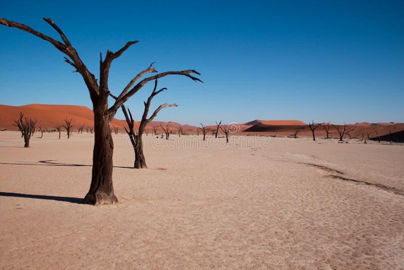 Dode vlei, de dode vallei in sossusvlei, Namibië stock foto's