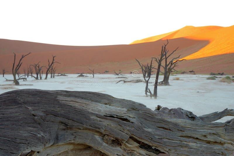 Dode Vlei in de Woestijn Namib stock foto