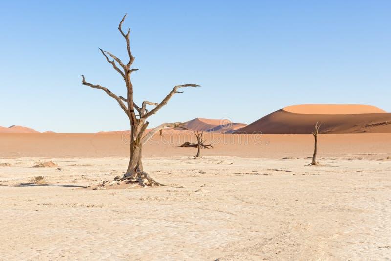 Dode Vlei dichtbij Sesriem in Namibië stock fotografie