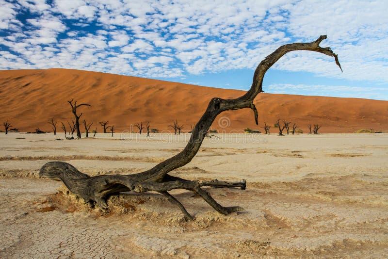 Dode Vlei dichtbij Sossusvlei in Nambia stock fotografie